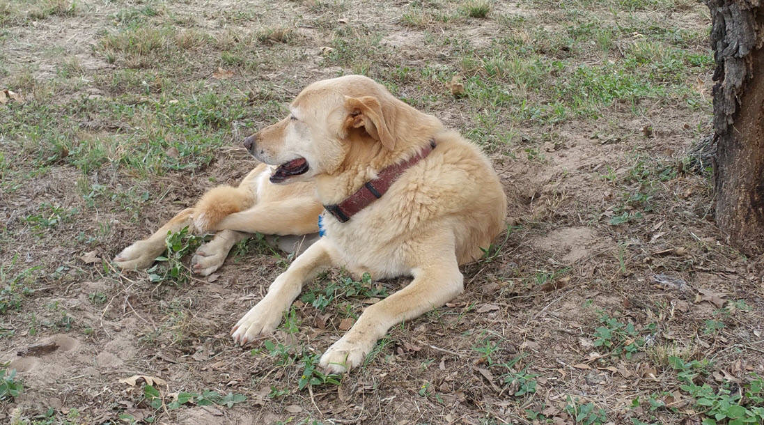 Cancer-in-dogs-what-to-do-when-your-dog-has-cancer
